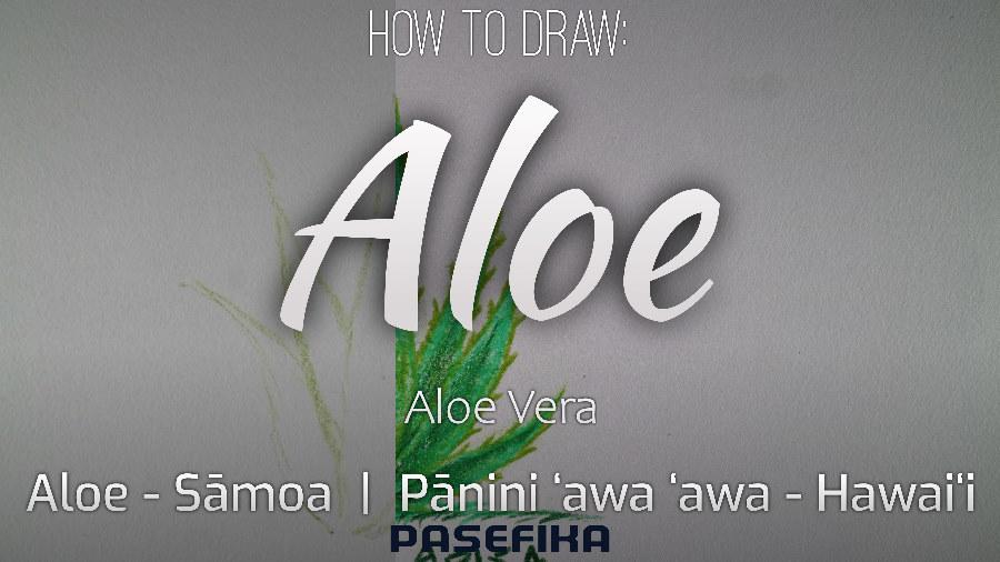 Aloe (aloe vera plant)  | Pasefika | Jon Apisa