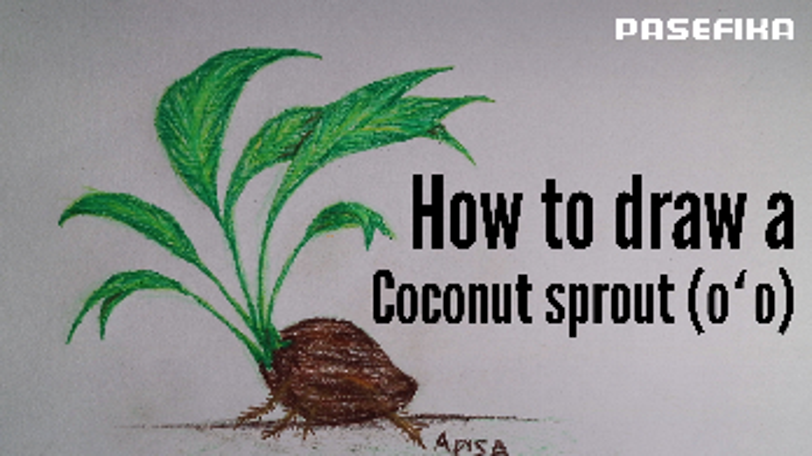 oʻo (Sprouted coconut plant) | Pasefika | Jon Apisa